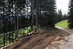 2018-Forstweg-Auhof-Hermi02